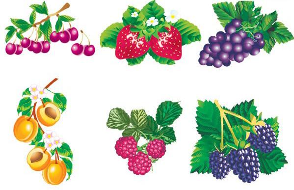 六款生动逼真的水果素材矢量图免费素材下载