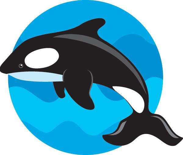 鲸鱼简笔画彩色