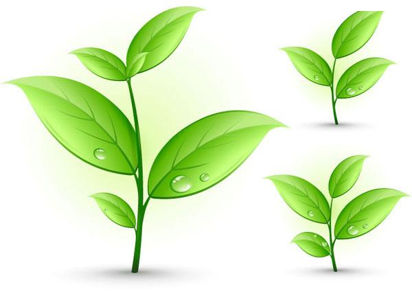 春天小草和树叶素材矢量图