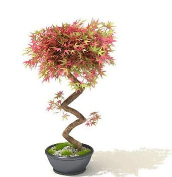 盆栽植物3dmax模型免费素材下载高清图片