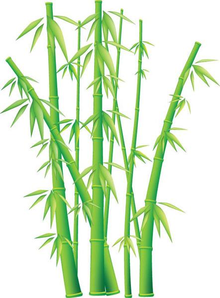 含jpg预览图,植物矢量素材,矢量竹子,翠竹,绿色,竹林,竹叶,矢量素材 &