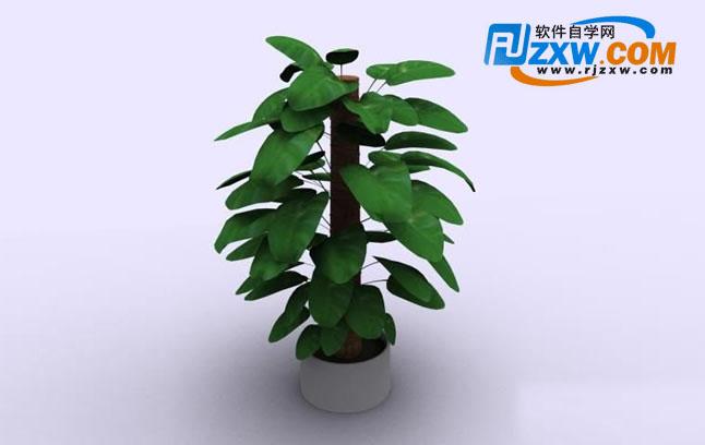 室内盆栽植物3d模型免费素材下载