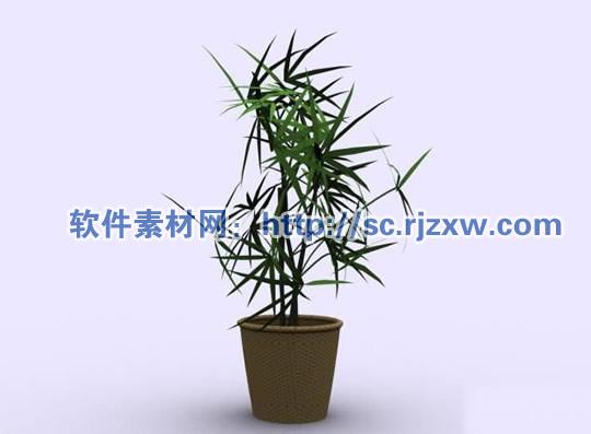 原创室内四季竹植物3dmax模型免费素材下载