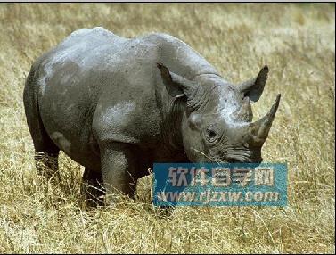 野生动物 377