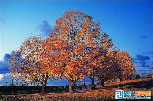 用PS通道给繁密的树支抠出背景教程_软件自学网