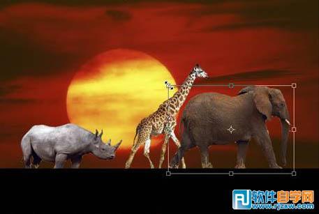 有趣的动物剪影海报