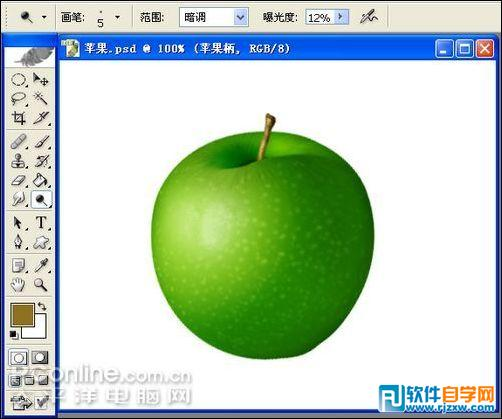 观察植物苹果的结构图
