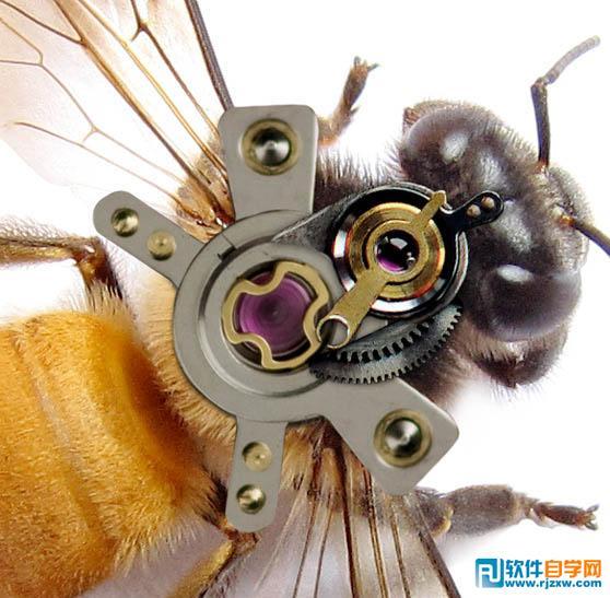 怎么用素材合成一只机器蜜蜂 ps教程 - 软件自学网