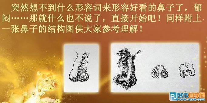 鼻子的结构图.