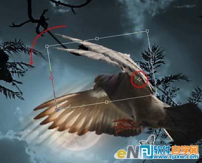 ps合成夜空飞翔的鸽子