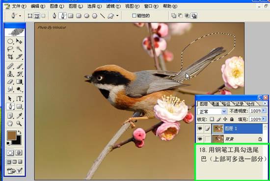 Photoshop制作小鸟张嘴鸣叫动画_软件自学网