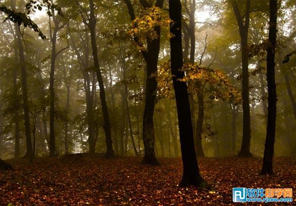 用ps给森林图片加上炫丽的投射光束