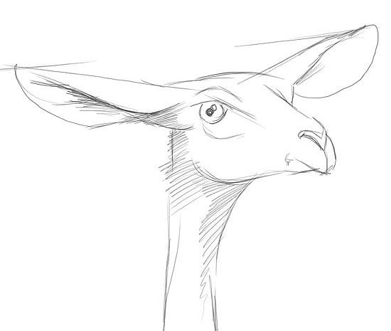 铅笔画鹿教程