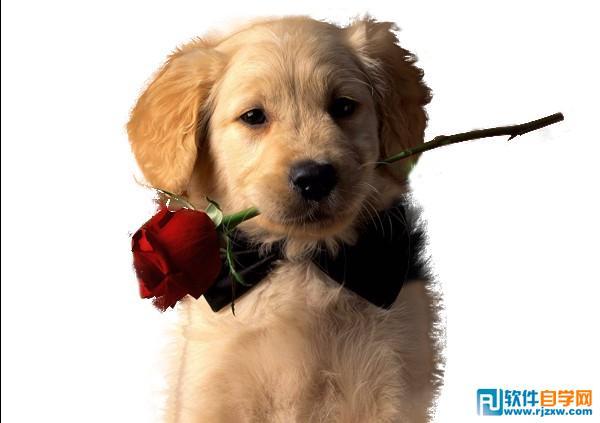 PS扣出可爱的小狗照片教程 - 1 - 软件自学网