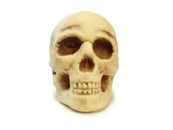 骨头素材2>
